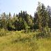 Landschaft am Moorsee