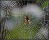 spider - man ...