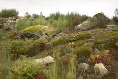 Parque Nacional da Peneda-Gerês, verdes