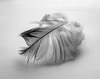 #23 A feather