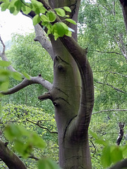 Talking with the ents.