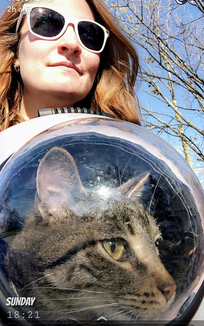 Captain Spacecat embarks on terrestrial exploration of planet Earth