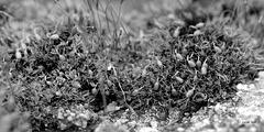 Mousses de mars  (2)
