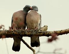 c' est beau l' amour .....