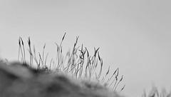 Mousses de mars  (5)
