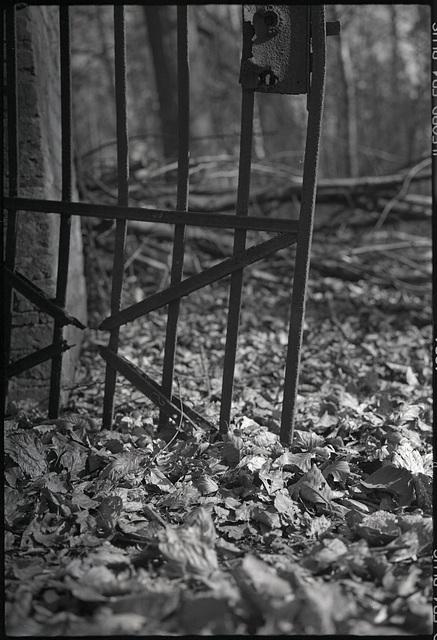 Das Tor zum Wald
