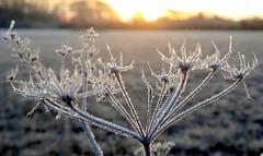 Eiskristalle in der Morgensonne