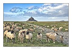 Moutons de près-salés