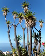 Palms, sea and sky...  ©UdoSm
