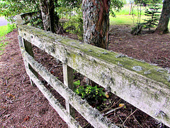 Fence Under Pines.