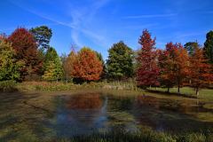 Pour changer , une photo d'automne .