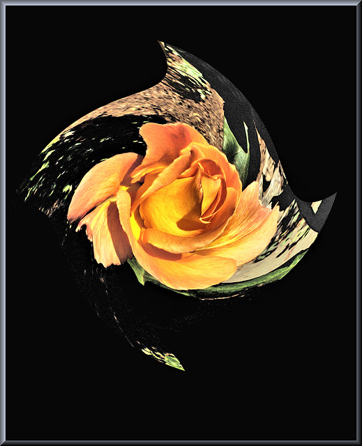 Beschwipste Rose - Drunken Rose