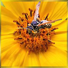 Meine Blüte... My flower... ©UdoSm