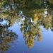reflets sur l'eau, teintes d'automne