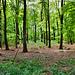 Naturschutzgebiet Auf der Kämpe (Gelsenkirchen-Scholven) / 5.05.2019