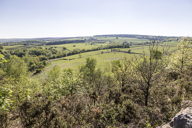 Bole Hill Plantation view to south-west
