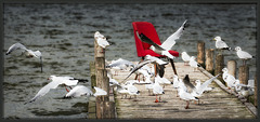 44/50 - birds