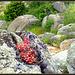 Stonecrop, granite and spring wildflowers.