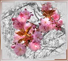 Frühling verdrängt Winter. Spring displaces winter. ©UdoSm
