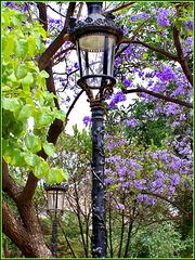 Barcellona : Lampioni tra i fiori