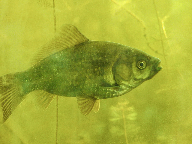 20170611 1850CPw [D~LIP] Fisch, UWZ, Bad Salzuflen