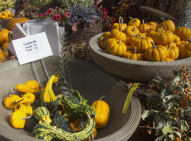 pumpkinsgourds