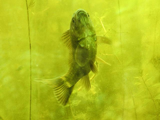20170611 1852CPw [D~LIP] Fisch, UWZ, Bad Salzuflen