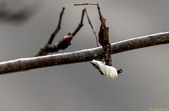 Baum vorm Fenster: Fremdkörper