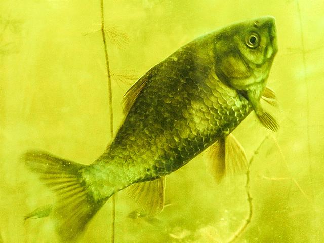 20170611 1853CPw [D~LIP] Fisch, UWZ, Bad Salzuflen