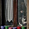 Window Cat in Obernai, Alsace, France - 2017-02-19_062