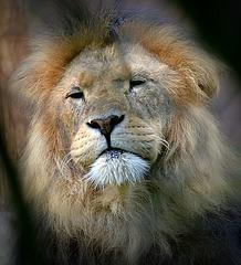 The Lions Den !!