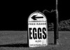 Free Range Eggs B&W