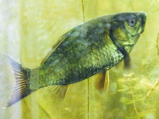 20170611 1862CPw [D~LIP] Fisch, UWZ, Bad Salzuflen