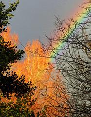 Ablaze with colour