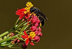 Wasp.   8057750