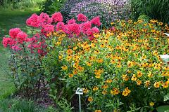 Sommer Gartenpracht