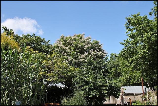 Jardin botanique de La Charme -63 (11)