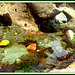 Rockpool, for Pam.