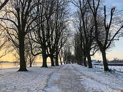 Winterlicher Morgenspaziergang am Rhein (2 x PiP) *Et jitt a Levve zo jeneeße, denk aff un zo ens draan...