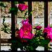 Pour voir la vie en rose :-)