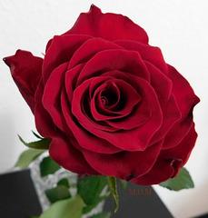 Ma rose...