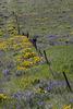 Spring in Eastern Washington