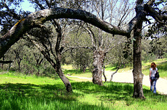 El Pardo - with encinas (holm oaks), common and much loved in Spain.