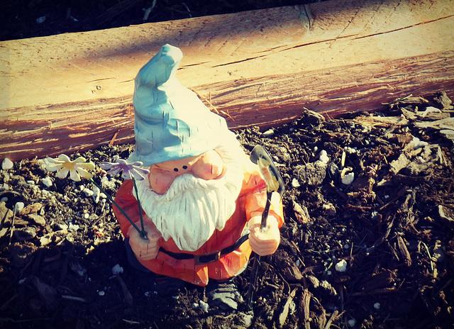 Gneighbor's gnome