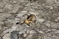 Cat on a Cold Stone Floor – El-Muraqa Monastery, Daliyat al-Karmel, Israel