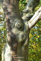 Sensuous Tree