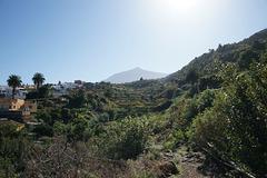 View Of El Teide From Icod