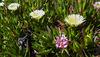Spring in Corsica