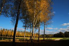 Aujourd'hui , du côté de Tavers , dans le Loiret