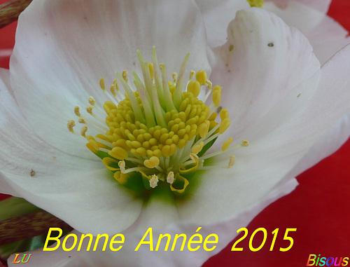 ** Bonne Année 2015 **